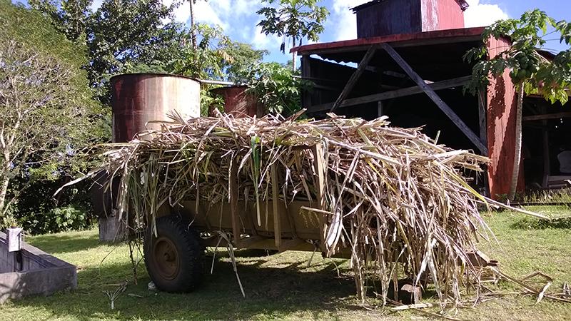 rhum store rhum agricole